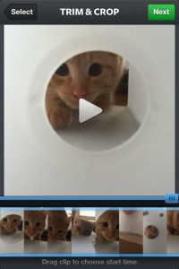 Instagram's tools allow you to edit your video's length. And yes, this is a video of my cat :)